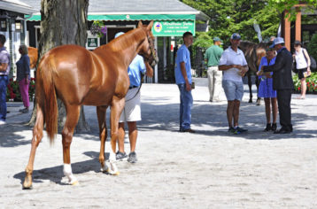 OBS July Sales Breeze Show - Day 3