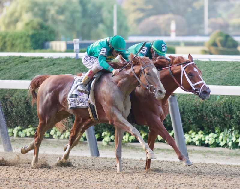 Code of Honor & Vino Rosso Battle heads apart in the Jockey Club Gold Cup