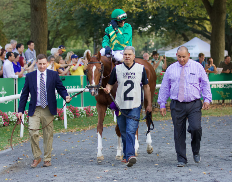 Code of Honor by Noble Mission Walking in the Belmont Park Paddock