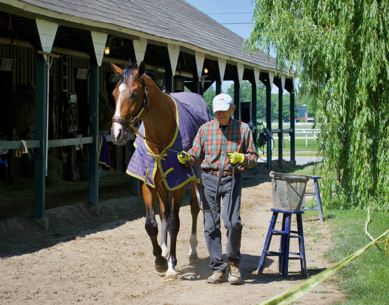 Decorated Invader by Declaration of War Walking Shed Row at Saratoga