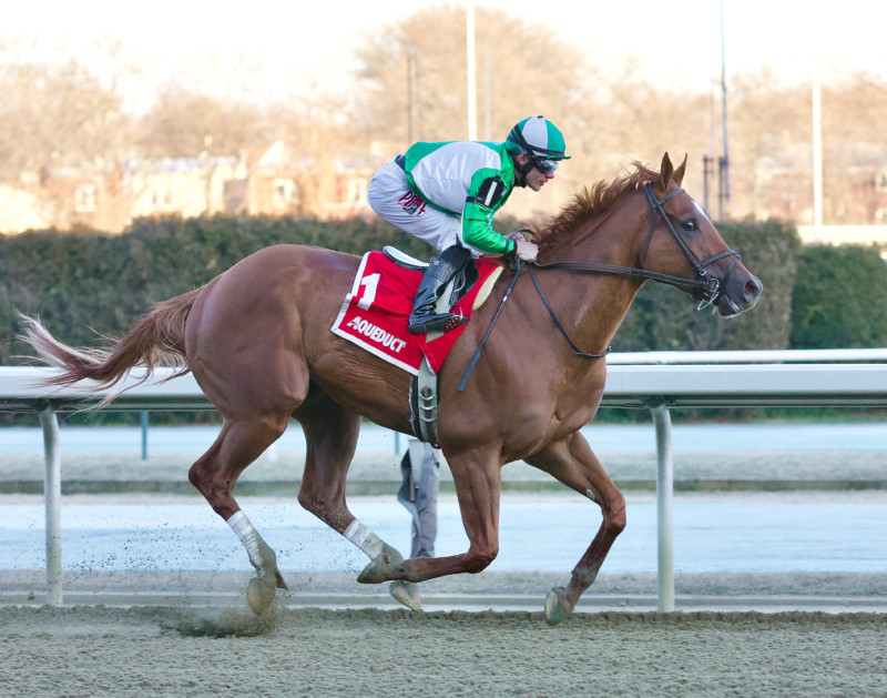 Mr. Buff, a strong muscular chestnut horse winning easily at Aqueduct