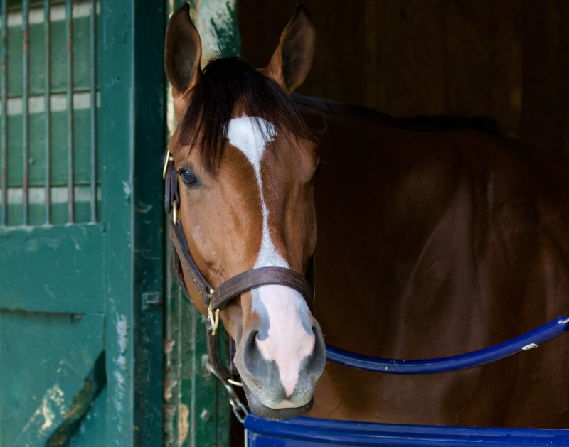 Munnings/Mighty Eros, a young 2 year-old colt at Historic Saratoga