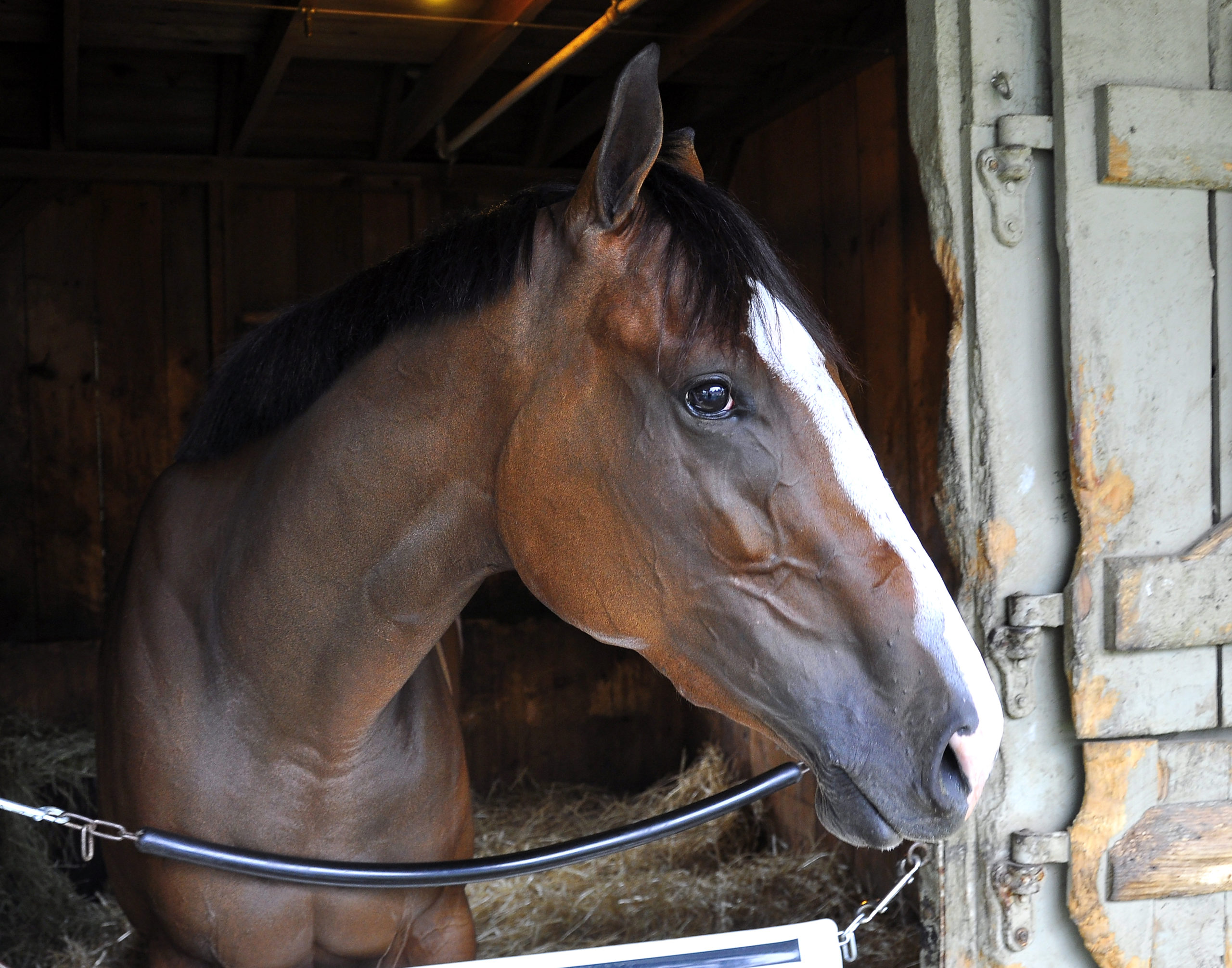 Union Gables breaks her Maiden in Debut at Saratoga