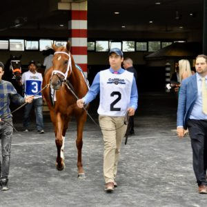 Monomoy Girl Sells for 9.5 million
